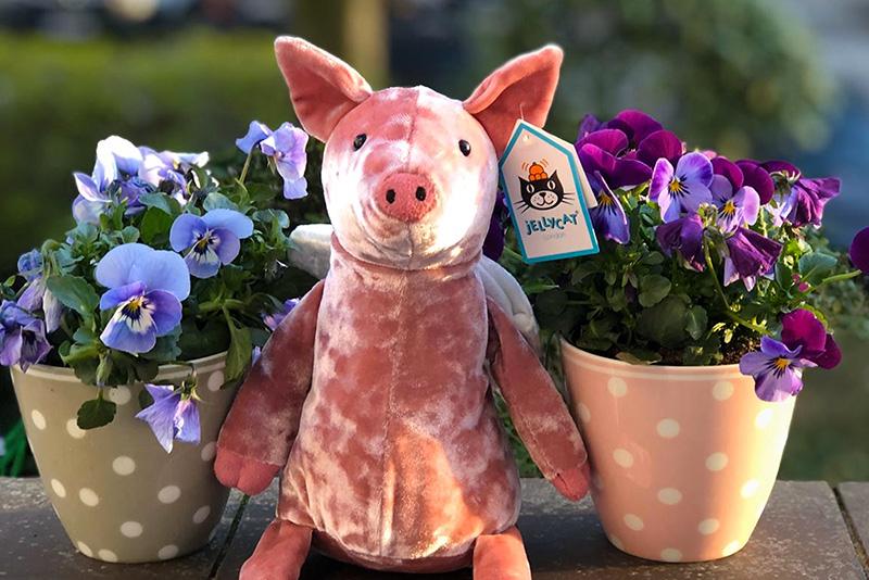 Piggy might Fly- Schweinchen